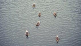 Troep van eenden