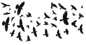 Troep van geïsoleerde vogels stock afbeeldingen