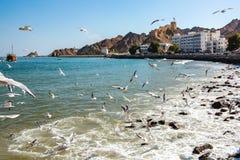 Troep van meeuwen op de kust van de Omani Baai in de stad van Muscateldruif dichtbij de waterkant stock fotografie