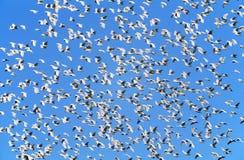 Troep van migrerende vogels royalty-vrije stock fotografie