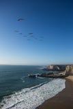 Troep van pelikanen die over strand met hoge klippen vliegen Stock Afbeelding