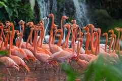 Troep van Roze Flamingo's stock afbeeldingen