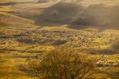 Troep van schapen Royalty-vrije Stock Afbeelding