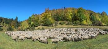 Troep van schapen in de Herfst royalty-vrije stock afbeeldingen