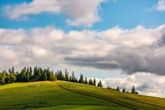 Troep van schapen op hellingsweide dichtbij het bos Royalty-vrije Stock Foto's