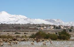 Troep van schapen in sirente-Velino Park, Italië Royalty-vrije Stock Afbeelding