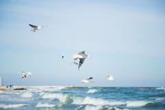 Troep van vliegende zeemeeuwen in blauwe hemel onder overzeese golven Stock Fotografie
