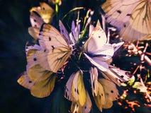 Troep van vlinders royalty-vrije stock afbeelding