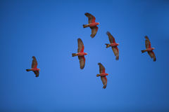 Troep van vogels Stock Afbeelding