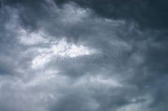 Troep van vogels Royalty-vrije Stock Foto's
