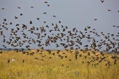 Troep van vogels stock foto