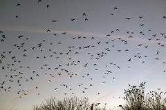 Troep van vogels Royalty-vrije Stock Fotografie