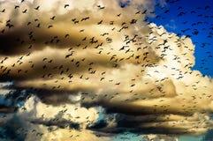 Troep van vogels in de hemel Stock Foto