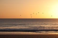 Troep van vogels die in een zonsondergang vliegen royalty-vrije stock foto