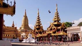 Troep van vogels die op de achtergrond van pagoden omcirkelen stock video