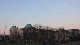 Troep van vogels die over de roze achtergrond van de zonsonderganghemel vliegen stock footage
