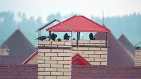 Troep van vogels die schuilplaats van de regen op de stedelijke daken nemen stock footage
