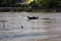 Troep van vogels met boot op de rivier Royalty-vrije Stock Foto