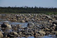 Troep van vogels op de rotsen Royalty-vrije Stock Afbeeldingen