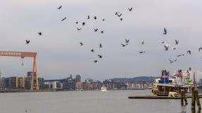 Troep van vogels over stadshorizon Göteborg Zweden royalty-vrije stock fotografie