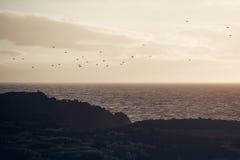 Troep van vogelsvlieg over grijze overzees in avond Stock Fotografie