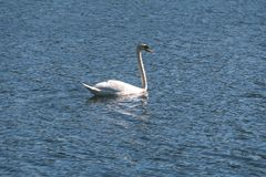 troep van wilde vogels die in water dichtbij kust rusten - uitstekende retro ziet eruit stock afbeeldingen
