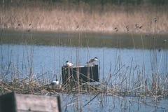 troep van wilde vogels die in water dichtbij kust rusten - uitstekende retro ziet eruit royalty-vrije stock afbeelding