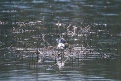 troep van wilde vogels die in water dichtbij kust rusten - uitstekende retro ziet eruit royalty-vrije stock foto