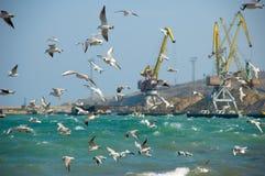 Troep van zeemeeuwen Stock Afbeelding