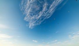 Troep van zeemeeuwen die in het blauwe overzees bij zonsondergang vliegen royalty-vrije stock foto's