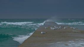 Troep van zeemeeuwen die op landend dok in onweer en golven in de winter zitten stock video