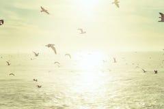 Troep van zeemeeuwen die over het overzees vliegen royalty-vrije stock foto