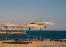 Troep van zeemeeuwen die over het strand met met stro bedekte paraplu's vliegen Royalty-vrije Stock Foto