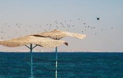 Troep van zeemeeuwen die over het strand met met stro bedekte paraplu's vliegen Stock Foto