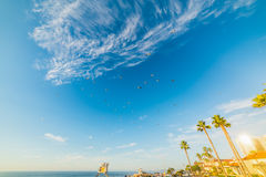 Troep van zeemeeuwen die over La Jolla vliegen stock fotografie