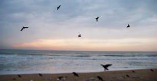 Troep van zeemeeuwen die over overzees vliegen Stock Foto