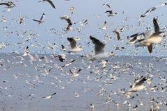 Troep van zeemeeuwen het vliegen Stock Foto's