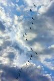 Troep van zwarte vogels die tegen de hemel met wolken vliegen Stock Fotografie