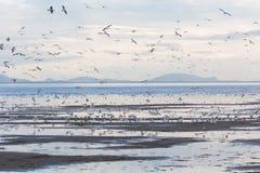 Troep vliegende meeuwen Stock Foto