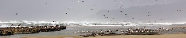Troepen van zeemeeuwen die langs het kustzandstrand vliegen Stock Foto