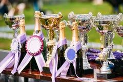 Troféus do campeão Copos dos vencedores trophy Fotos de Stock