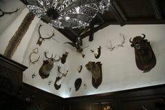 Trofee Hunter Room in Nanosy, WIT-RUSLAND Zaal met trofeeën van de jager gevulde wilde dieren royalty-vrije stock fotografie