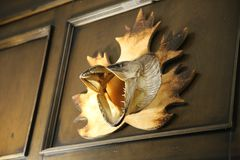 Trofeehoofd van een snoek op een houten muur stock afbeelding
