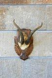 Trofeehoornen Royalty-vrije Stock Foto