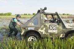 Trofeo 2012 di Barsuk (tasso). Fotografie Stock