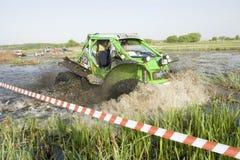 Trofeo 2012 di Barsuk (tasso) Fotografia Stock