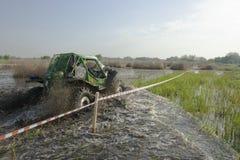Trofeo 2012 di Barsuk (tasso) Immagine Stock