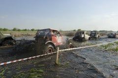 Trofeo 2012 di Barsuk (tasso) Immagine Stock Libera da Diritti