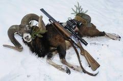 Trofeo de la caza de Mouflon con el arma en nieve Foto de archivo libre de regalías