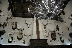 Trofeum myśliwego pokój w Nanosi, BIAŁORUŚ Pokój z trofeami myśliwy faszerował dzikie zwierzęta zdjęcia stock